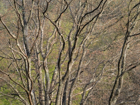 Trees full of character grace the landscape along the southern portion of the Blue Ridge Parkway