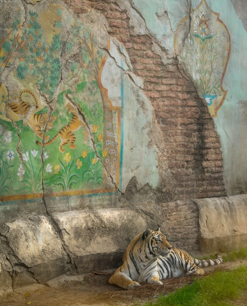 A tiger rests against the backdrop of beautifully themed architecture in Disney's Animal Kingdom