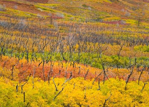 Autumn Hillside in LaSals