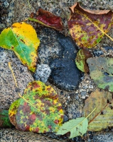 Shuffling along a creek in late fall, a glance down at my feet revealed extraordinary beauty