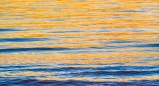 A golden sunset reflects in the gentle waves of Florida's Gulf of Mexico coastline