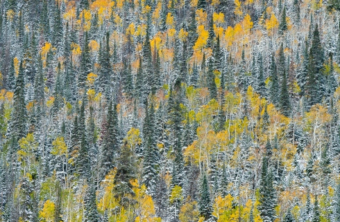 Early winter makes its presence felt in October with snow in the La Sal Mountains of Utah