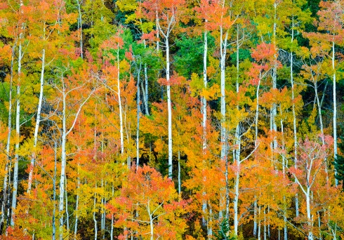 The San Juan Mountains in southwest Colorado come alive with mesmerizing color in early October