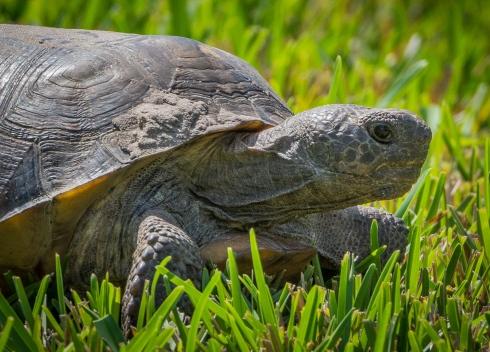 Turtle in theBackyard
