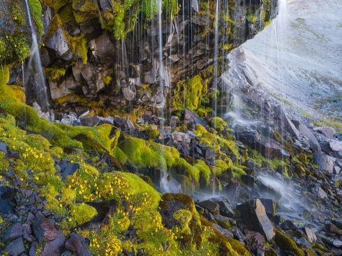 Summer glacial melt creates a lush grotto in a rugged boulder-strewn ravine on Rainier's slopes