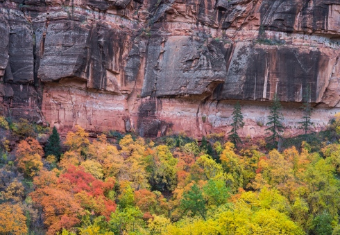 Rocks and trees in Zion Canyon during fall testify to the Creator's glory