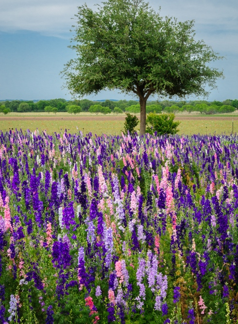 Wildflowers in the Texas hill country were a colorful highlight of our road trip