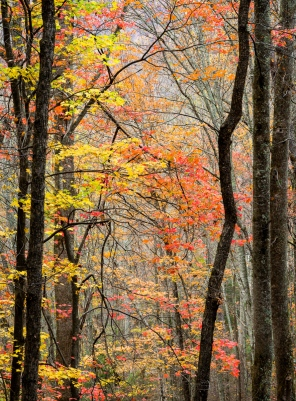 An autumn forest cathedral invited me to worship in the Great Smoky Mountains