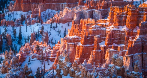 The light of sunrise sets snow-covered hoodoos to glowing at Bryce Canyon